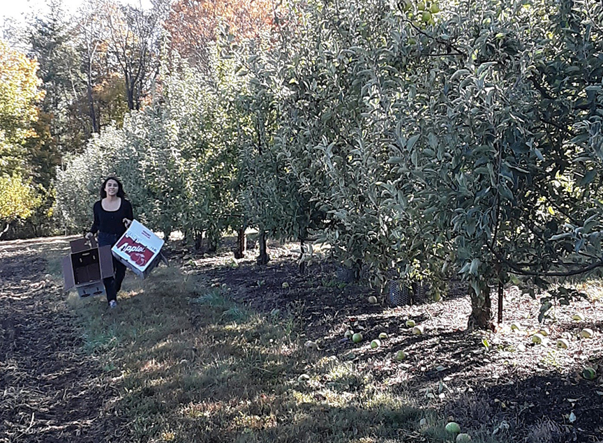 Valeria Izeppi picking apples