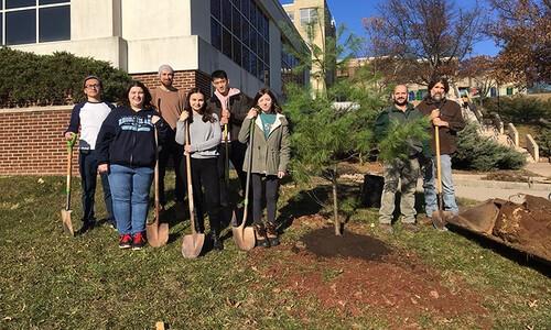 space pine tree planting