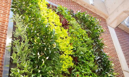 cropped green wall image